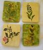 Blumen, Keramik, Pflanzenstudie, Untersetzer