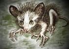 Tiere, Madagaskar, Fingertier, Zeichnungen