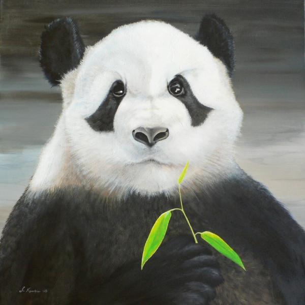 Tierportrait, Bedroht, Portrait, Bär, Panda, Tiere