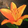 Ölmalerei, Lilie, Pflanzen, Malerei