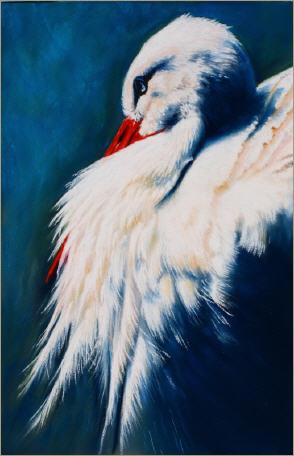 Storch, Weiß, Adebar, Vogel, Blau, Natur