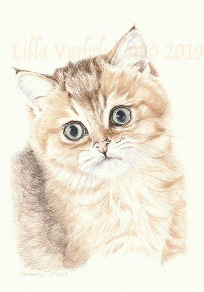 Tierportrait, Katze, Tusche, Babykatze, Katerchen, Jungtier