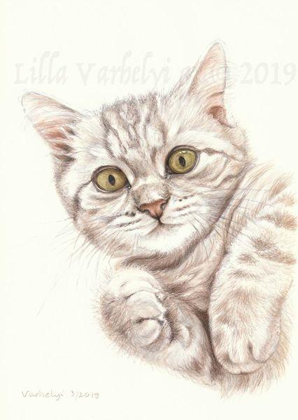 Animaldraw, Tierportrait, Katze, Auftragsarbeit, Babykatze, Tuschmalerei