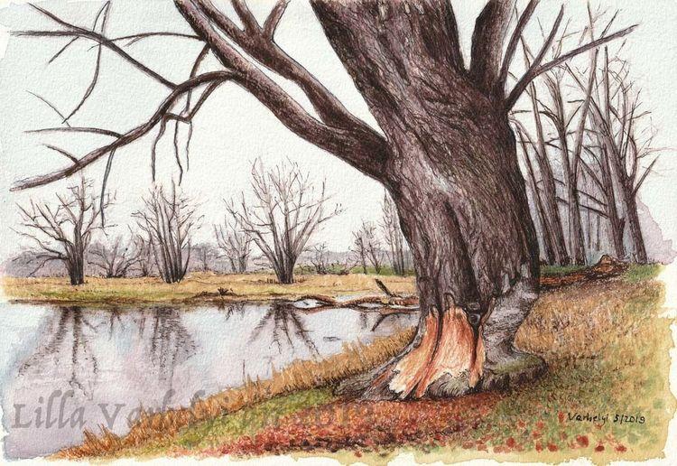 Baum, Landschaft, Baumstudie, Fluss, Flussufer, Tuschezeichnung