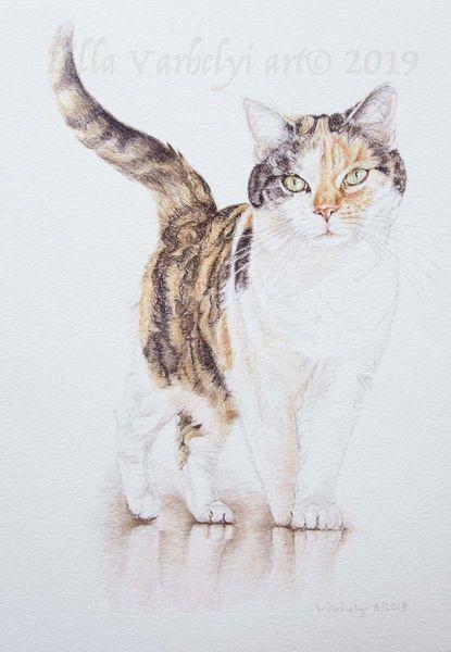Tierzeichnung, Tierportrait, Spiegelung, Katze, Auftragszeichnung, Tuschmalerei