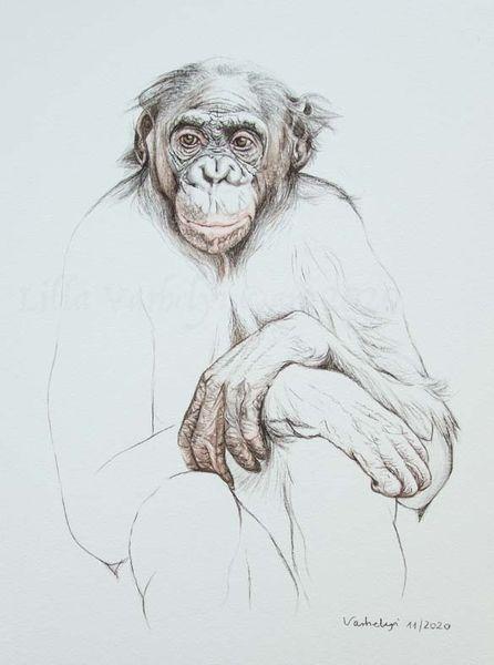 Tierportrait, Tuschmalerei, Affe, Primaten, Zeichnung, Bonobo