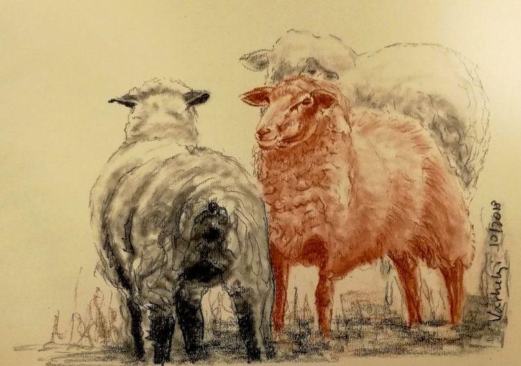 Schaf, Tiere, Skizze, Zeichnung, Kohlezeichnung, Zeichnungen