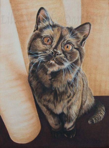 Gemälde, Catart, Commission, Katze, Realismus, Retinoil