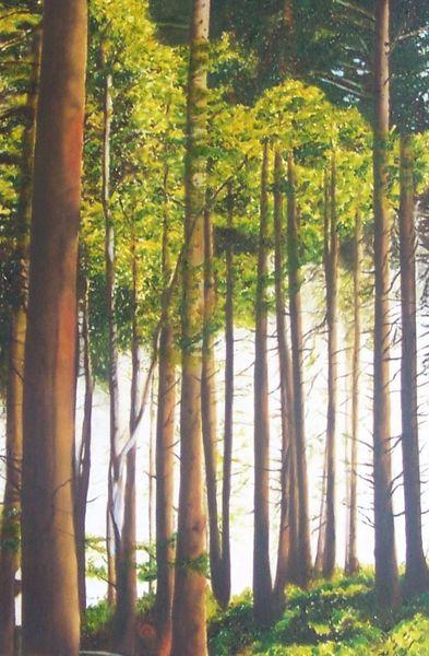 Wald, Baumstamm, Naturwald, Eifel, Licht, Naturpark