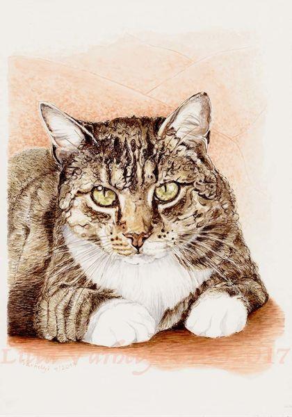 Katze, Tusche, Tiere, Tabbycat, Commissiondraw, Tierportrait