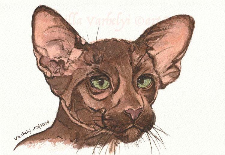 Tierportrait, Skizze, Katze, Tuschmalerei, Braun, Zeichnungen
