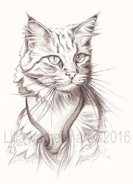 Tuschmalerei, Katze, Monochrom, Maincoon, Katzenzeichnung, Zeichnung