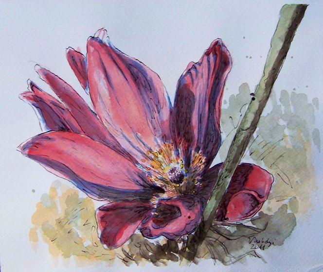 Blumen, Transparenz, Kuhschelle, Violett, Blüte, Aquarell