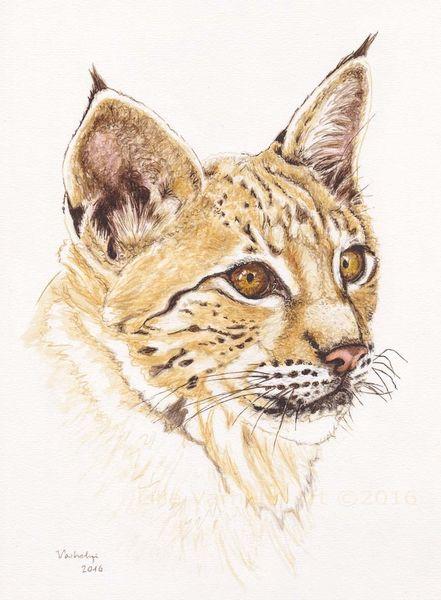 Tiere, Tuschmalerei, Wildtier, Federzeichnung, Tiermalerei, Großkatze