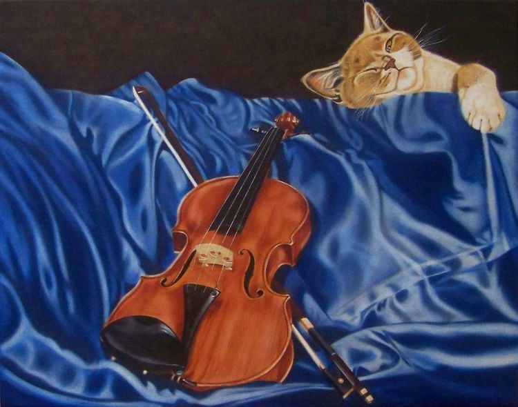 Katze, Stillleben, Musik, Müde, Nstrument, Faltenwurf