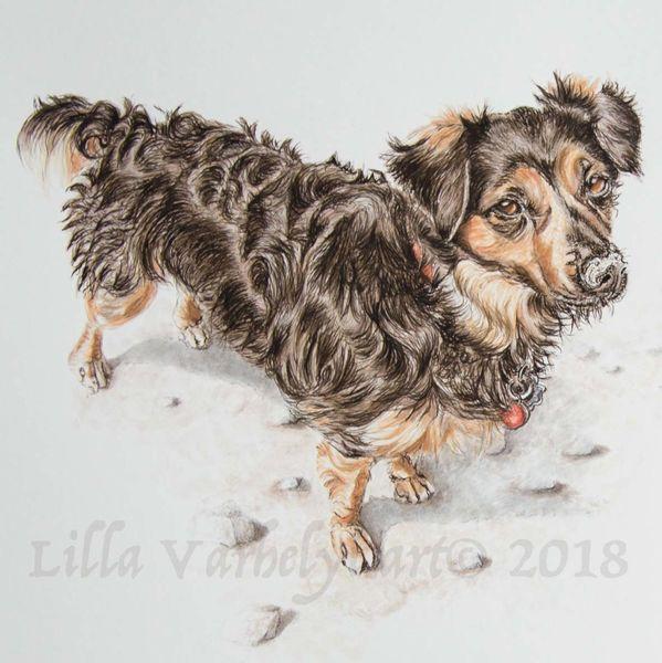 Tusche, Hund, Tiere, Mischlingshund, Tierportrait, Tuschezeichnung