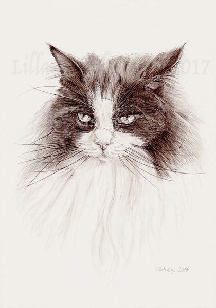 Federzeichnung, Catart, Katze, Monochrom, Langhaarkatze, Tusche