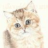 Tiere, Auftragsarbeit, Tierportrait, Katze