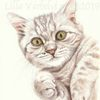 Babykatze, Tuschmalerei, Jungtier, Animaldraw