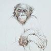 Affe, Zeichnung, Bonobo, Portrait