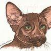 Skizze, Katze, Tuschmalerei, Braun