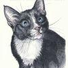 Kater, Tiermalerei, Katze, Auftragsarbeit