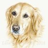 Goldenretriever, Commission, Tiere, Hund