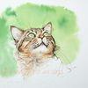 Tuschezeichnung, Grün, Katze, Norwegische waldkatze