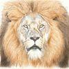 Löwe, Tierwelt, Tierportrait, Tuschmalerei