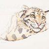 Tuschezeichnung, Tierportrait, Wildtier, Raubkatze