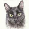 Tuschmalerei, Tierportrait, Tierzeichnung, Auftragszeichnung