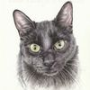 Katze, Auftragsarbeit, Tuschmalerei, Tierportrait