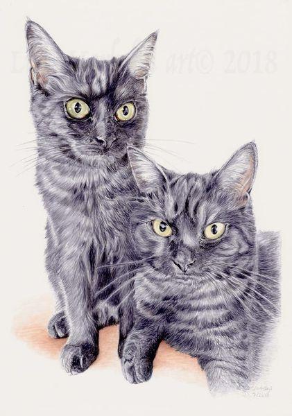 Commisssionart, Katze, Tuschezeichnung, Tiere, Tierportrait, Tierzeichnung