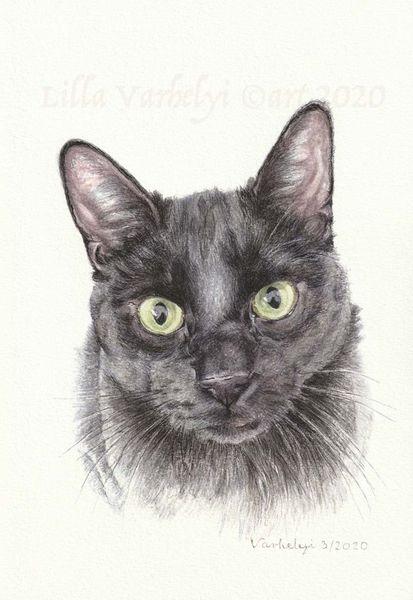 Schwarz, Katze, Auftragsarbeit, Tuschmalerei, Tierportrait, Tierzeichnung