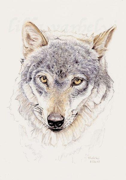 Tiere, Tuschezeichnung, Wolf, Lupus, Tierwelt, Wildtier