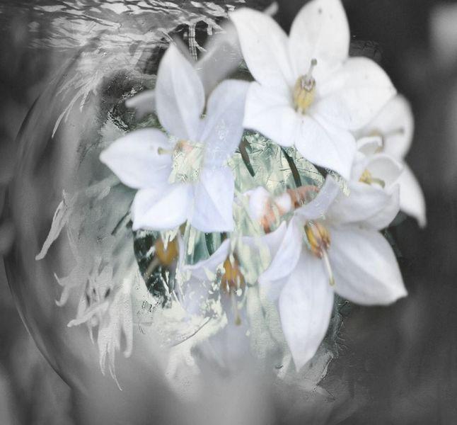 Fotografie, Pflanzen, Frühlingsgefühle