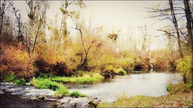 Natur, Herbst, Lieblingsplatz, Fotobearbeitung, Stille, Fotografie