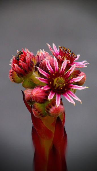 Blüte, Natur, Fotografie, It, Pink