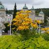 Blumen, Stadt, Fotografie, Reise