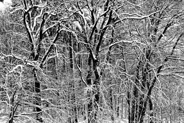 Zweig, Äste, Baum, Schnee, Fotografie, Hdr