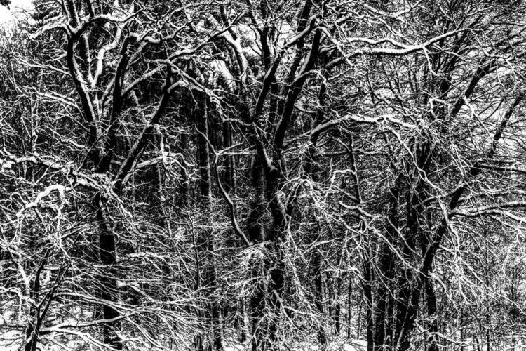 Zweig, Schnee, Äste, Baum, Fotografie, Hdr