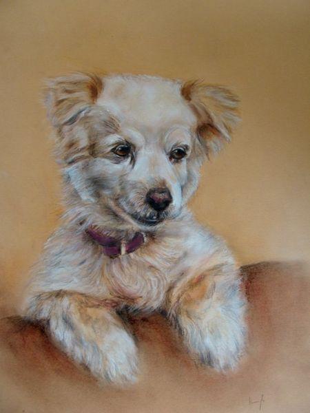 Hundezeichnung, Mischlingshund, Hundeportrait, Zeichnungen,