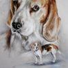 Beagle, Hund, Portrait, Hundeportrait