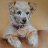 Hundeportrait, Hundezeichnung, Mischlingshund, Zeichnungen