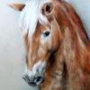 Pferdezeichnung, Pferdeportrait, Haflinger, Zeichnungen