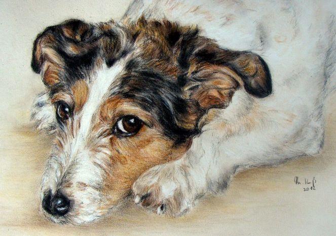 Hundeportrait, Tierportrait, Hundezeichnung, Malerei, Tiere, Terrier