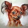 Ohr, Hund, Zeichnungen,