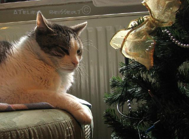 Weihnachten, Fest, Katze, Fotografie