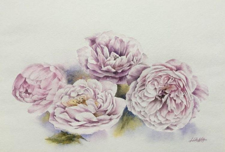 Rosa, Blumen, Englische rosen, Aquarell, Englische