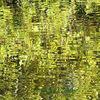 Reflektionen, Wasser, Grün, Herbst